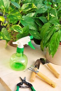House plants and a variety of gardening tools