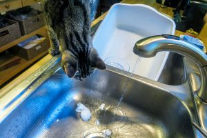 A cat looking at egg shells in a sink with running water