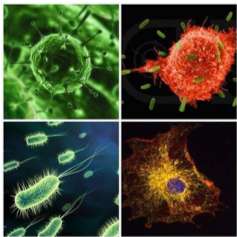 A variety of close up shots of pathogens